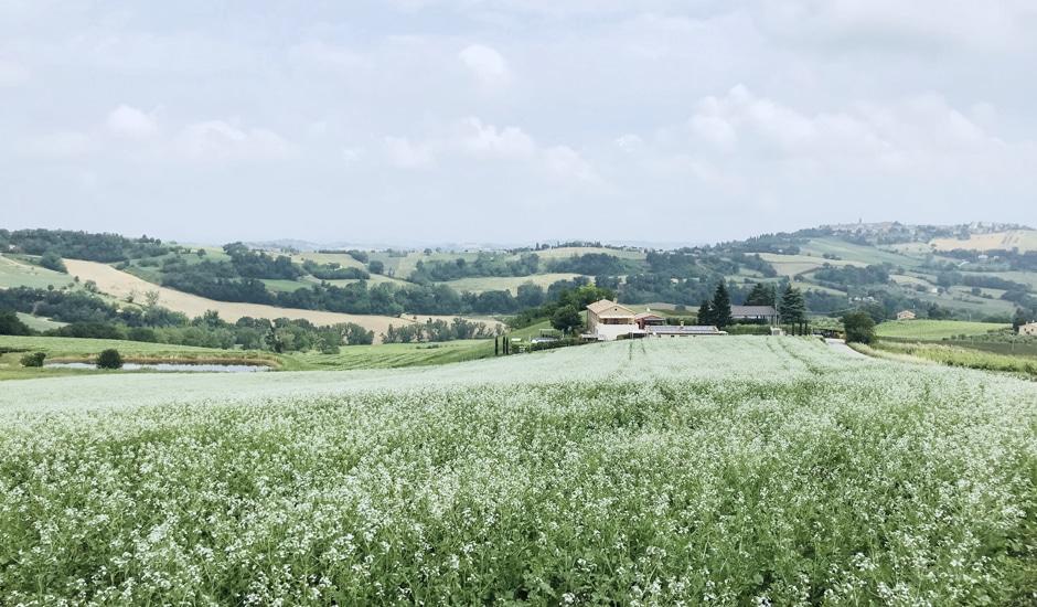 Corte Campioli – Das Leben ist eine Wundertüte: Das Haus von Weitem